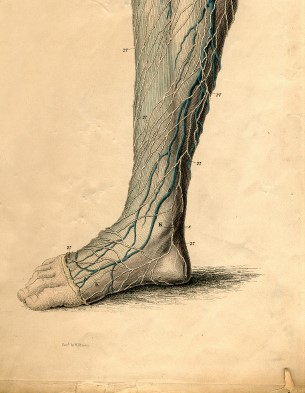 achilles tendon5